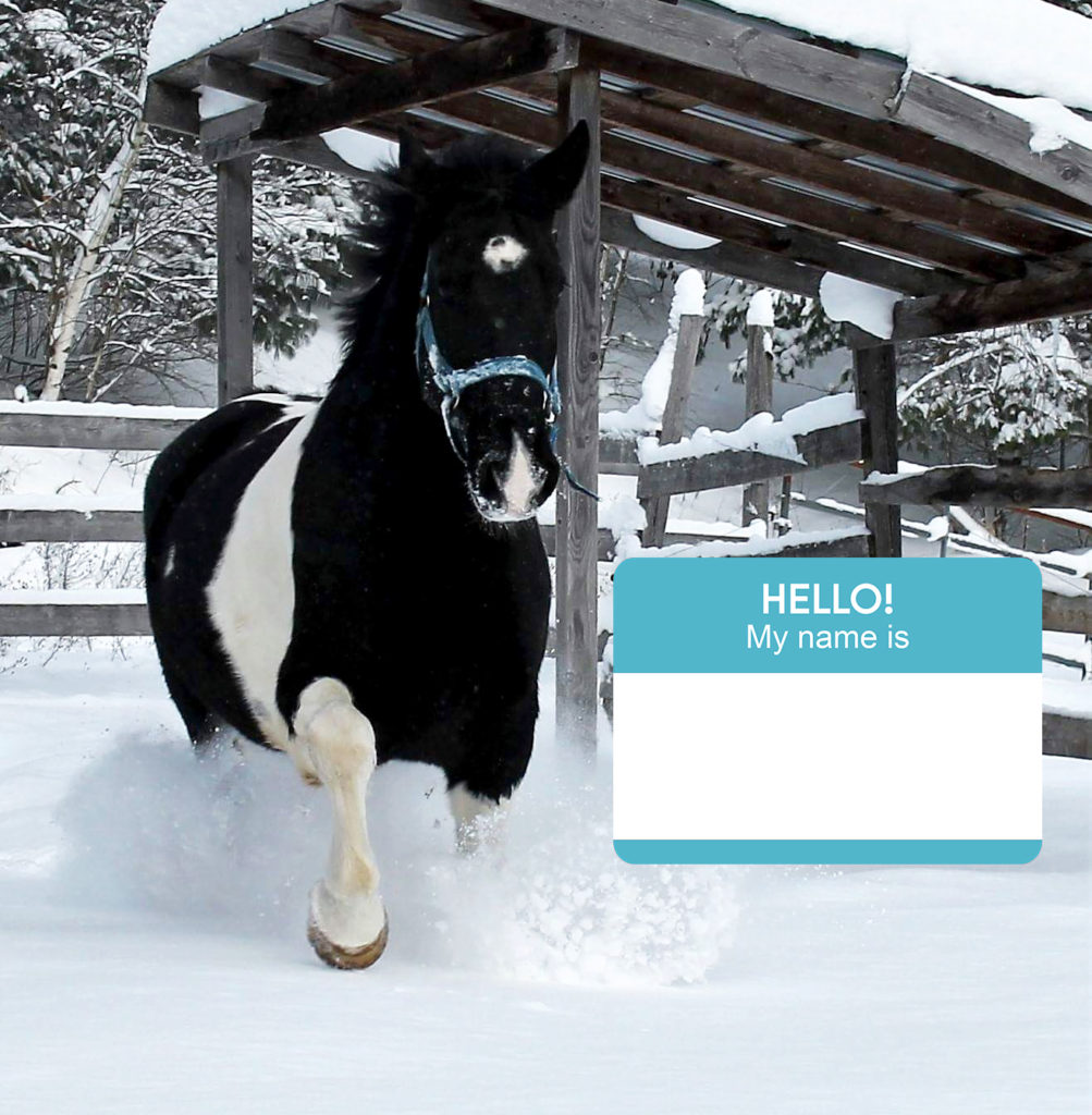 Horsewithnonamepgh contest downtown pittsburgh the person who suggests the winning name will have the opportunity to attend a meet and greet and a photo opportunity with the horse m4hsunfo